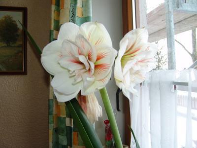 Blumen und ihre Bedeutung, Rosen, Maiglöckerl, Ranunkel, Anemonen ...